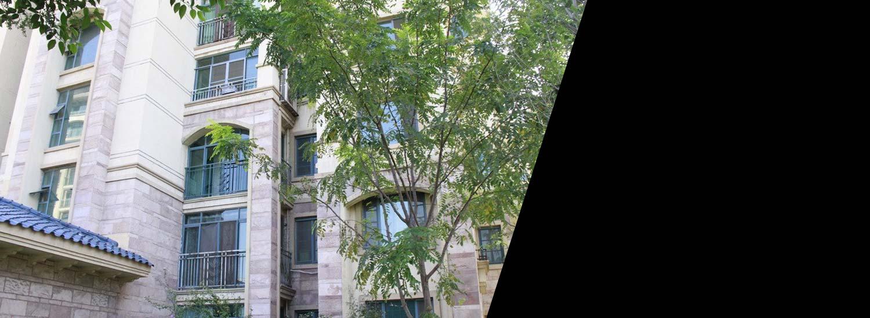 Restored window complex